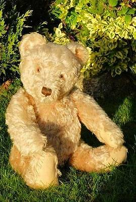 "RARE SUPERB ANTIQUE LARGE 25"" OLD STEIFF BEAR WITH BUTTON IN EAR, c.1950's"