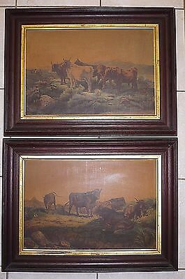 Pair Of Large Antique Framed English Scottish Highland Cattle Cows Prints