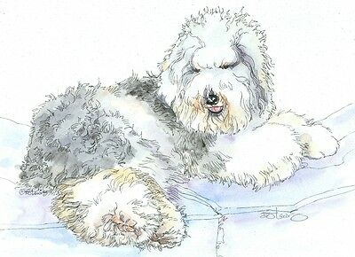 OLD ENGLISH SHEEPDOG Original Watercolor on Ink Print Matted 11x14 Ready 2 Frame