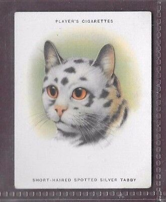 Players Cats Number 8