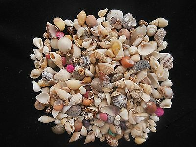 Minature coloured shells for crafts