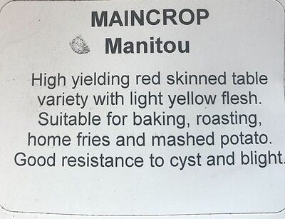 Premium 2017 MANITOU Main Crop Seed Potatoes pack of 5 or 10