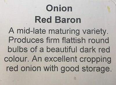 Premium RED BARON Onion Sets 1/2kg pack of sets