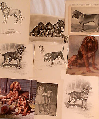 Rare Vintage Bloodhound Prints Lg Collection All Original