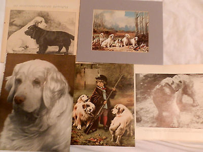 Rare Vintage Clumber Spaniel Prints Lg Collection All Original