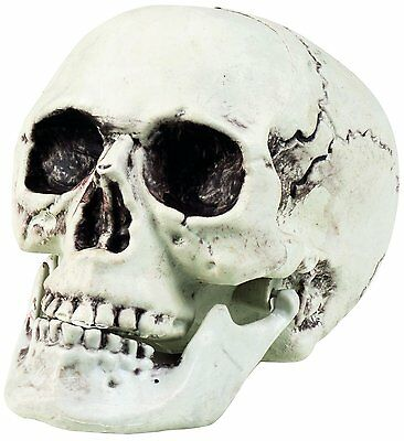 Skull Maxilla with Moveable Jaw Halloween Decoration 20x15cm