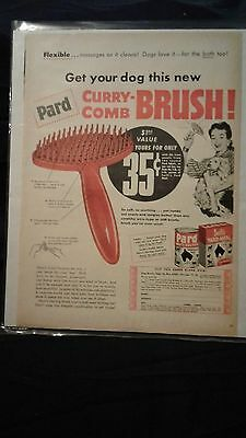 Vintage Advertising Pard Curry-Comb Brush