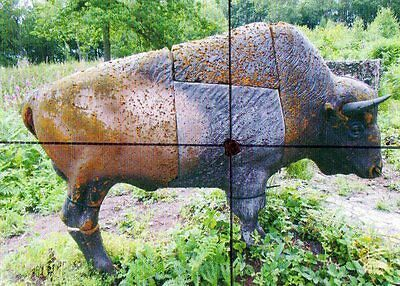 50  pocket size  photos of 3d targets all showing kill spot
