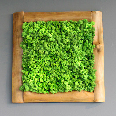"""Moosbild // Islandmoos Green Style Nature Art Moss Wall picture """"Central Park"""""""