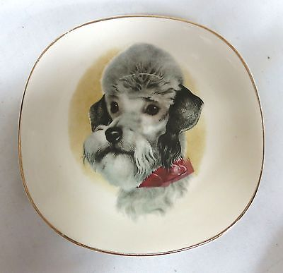 """Vintage Poodle DOG 5"""" Plate Weatherby Hanley England Falcon Ware"""