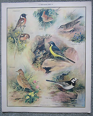 Vintage original Macmillan Educational School Poster INSECT-EATING BIRDS-3