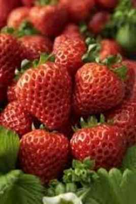 STRAWBERRY SEEDS - PROFESSIONAL PACK, 100 seeds