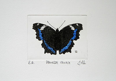 Butterfly Etching, Schmetterling, Radierung, é.a., Vanessa canace