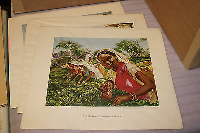 Set of 3 Brooke Bond Large Prints 17 x 19in Story of the Tea Advertising Series