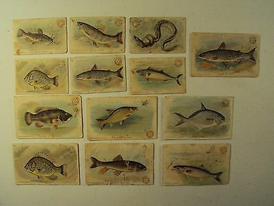 13 Arm & Hammer Fish Series / 2 Sizes / Trade Card