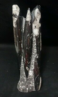"""8"""" Tall ORTHOCERAS Fossil Polished Tower."""