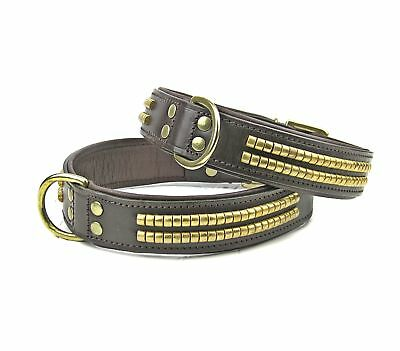 Brown Brass Studded Leather Dog Collar Staffy Rottweiler Pitbull