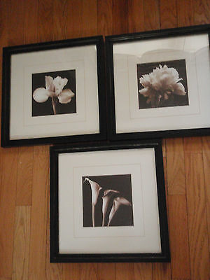 Set of 3 pictures White Calla Lilly Pink Peonie and day Lilly