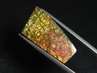 Ammolit / Ammolite 17,48 Ct. bunter Cabochon 29 mm (980w)
