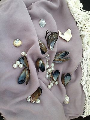 Jointed Mussel Shells