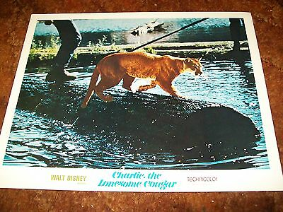 "Charlie the Lonesome Cougar-Disney Movie Lobby Card 11"" x 14"" - 1967"