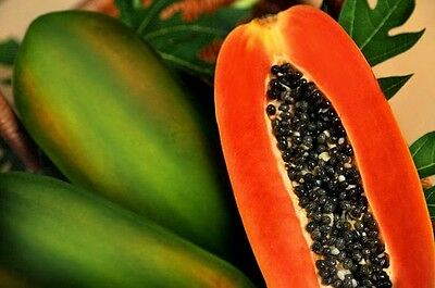 Red Papaya / Red Paw Paw x110 Seeds -- Fast Growing And Highly Productive