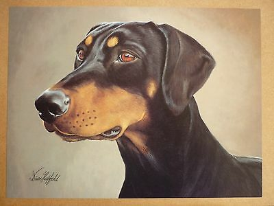 "Sale - Doberman Pinscher By Brian Hupfield Dog Print 12 X 16"" - Reduced"