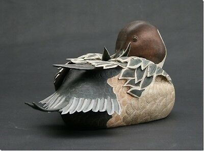 Wood Carved Pintail Duck Preening By Internationally Recognised British Artist
