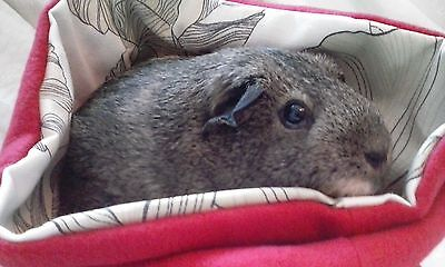 Chucklebunnies Guinea pig Cuddle bed pocket for 1, comfy bright red fleece