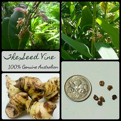 10+ BLACK GALANGAL SEEDS (Alpinia nigra) Medicinal Wild Asian Ginger Edible