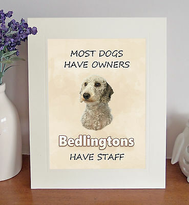 Bedlington Terrier 8 x 10 BEDLINGTONS HAVE STAFF Picture 10x8 Dog Print Fun Gift