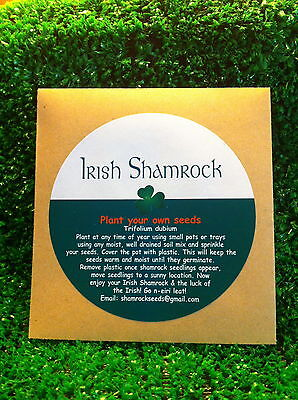 Irish Shamrock Seed Packet Grow Your Own Lucky Clover. Little Xmas Gift Present