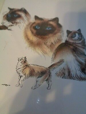Pet Notes 3 Cat Cards Colored RAGDOLL Breed Pictures and Description