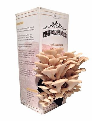 Mushroom Grow Box Kit - Pearl Oyster ( Open And Spray Kit )