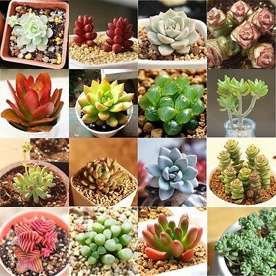 60pcs Multi-style Succulent Seeds Mini Potted Flower Seeds Anti-radiation New