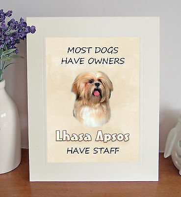 """Lhasa Apso 10x8"""" Free Standing """"Lhasa Apsos Have Staff"""" Picture Fun Novelty Gift"""