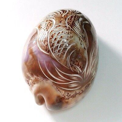 Shell Carved Handcraft Fish Design Art Sea Cowrie Paperweight Home Decorative