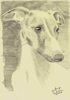 Whippet   * Windhund  ***A4  Limited  Print # 19