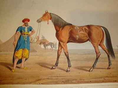 Antique Hand Coloured Aquatint c1820 THE ARABIAN (Horse) Henry Alken Mounted