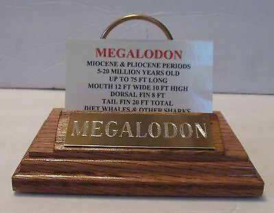 "SUPER NICE MEGALODON SHARK TOOTH TEETH 5"" FOSSIL DISPLAY STAND Tooth Not Include"