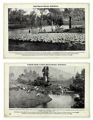 1908 Farming New South Wales Printed Postcards £6 Passage Merino Cattle