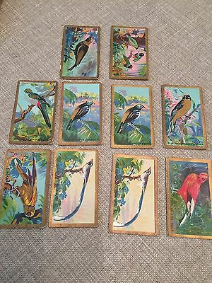 Cavanders Foreign Birds Loose Cards
