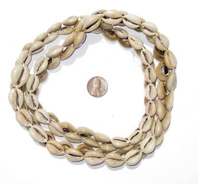 Kenyan Cowrie Shell Beads 15mm West Africa African White Unusual 30 Inch Strand
