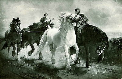 1905 Old antique LILIAN CHEVIOT Art Print Wild Stallion Welsh Cobb HORSE FAIR