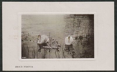 k2466)    EARLY  PHOTO POSTCARD BY ROTARY OF  PROUD PARENTS (FAMILY OF SWANS)