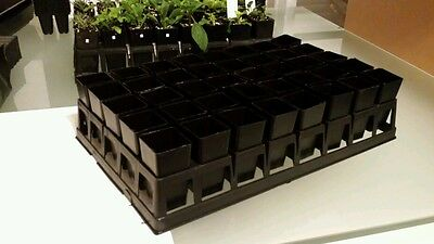 2 Plant trays and 80 tubes (40mm x 80mm). Seedling pots propagation (2 SETS)