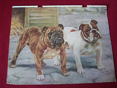 Vintage Print Bulldogs FT Daws 1934 Dog Picture Art For Framing