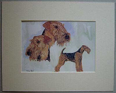 Airedale Terrier By Philip Ball Dog Art Card Print Mounted 10 X 8 Inch