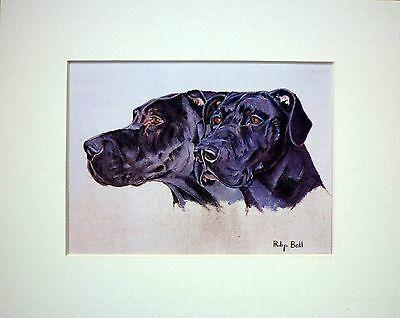 Great Dane By Philip Ball Dog Art Card Print Mounted 10 X 8 Inch