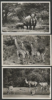 k1930)                               3  x  POSTCARDS OF ANIMALS FROM AFRICA